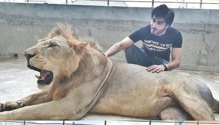 عمران عباس کی شیر کے ساتھ تصویریں وائرل