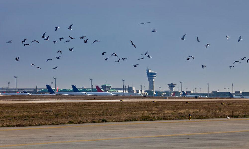 لاہور ایئر پورٹ پر پرندوں کی بھرمار، فلائٹس متاثر