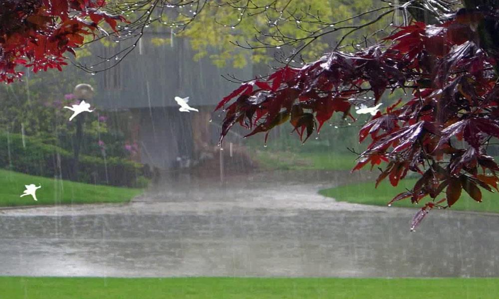 سائنسی خبر نامہ: بارش کیسے ہوتی ہے؟