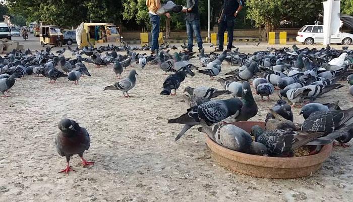 منفرد اور پُر لطف مقام ''کبوتر چورنگی''