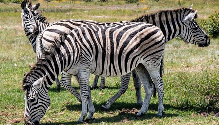 چند جانوروں کی دلچسپ اور انوکھی خصوصیات