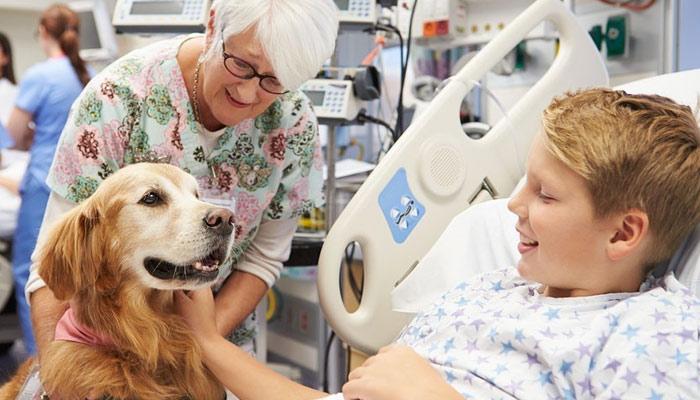 'اینیمل تھراپی' جانوروں کے ذریعے علاج، مگر کیسے؟