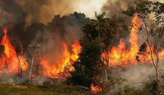 Amazon Fires Record Number Burning In Brazil Rainforest Space Agency