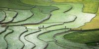 Massive Rice Paddy Painting In China Astonishes Visitors