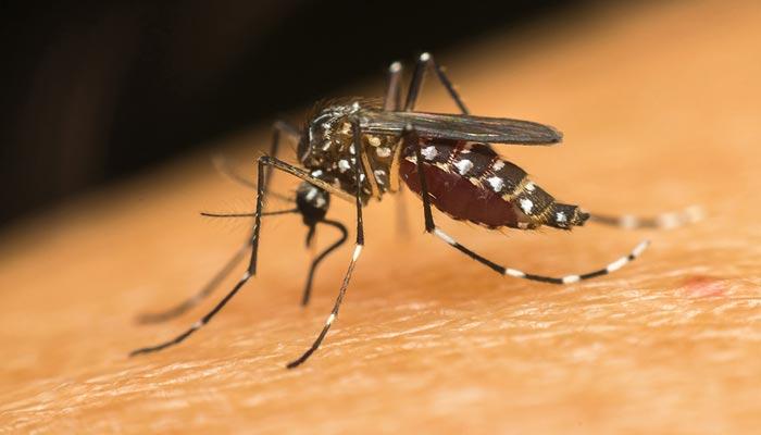 کراچی سمیت سندھ میں ڈینگی وائرس بے قابو ہوگیا