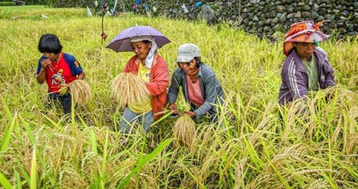 فلپائن : کچرے کے بدلے چاول دینے کی انوکھی آفر