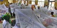Dengue Patient Increased In Punjab
