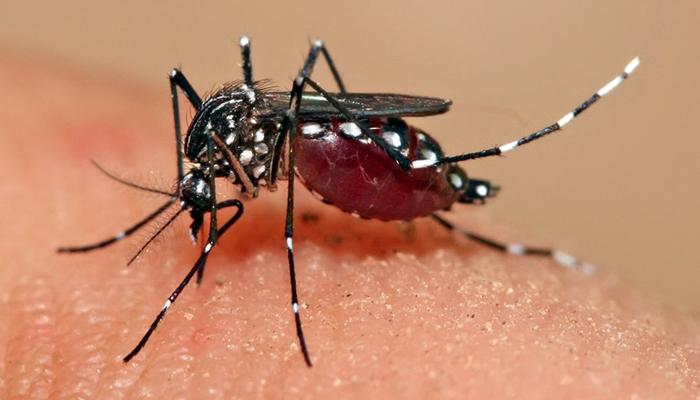 ڈینگی مچھر کے ڈنک سے پورا ملک متاثر