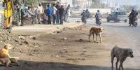 Dog Bites 6 Year Old Girl In Sanghar