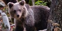 Bear Missing From Peshawar Zoo