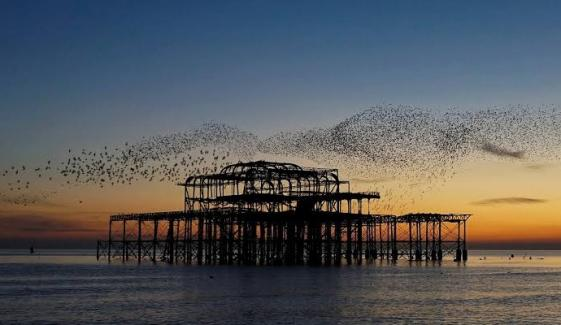 Murmuration Of Starlings Performs Stunning Sunset Dance At Brighton Uk