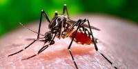 More 108 Dengue Cases Confirmed In Kpk