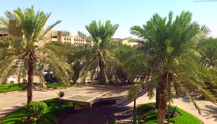 سعودی عرب میں کھجور کے درخت کتنے ہیں؟