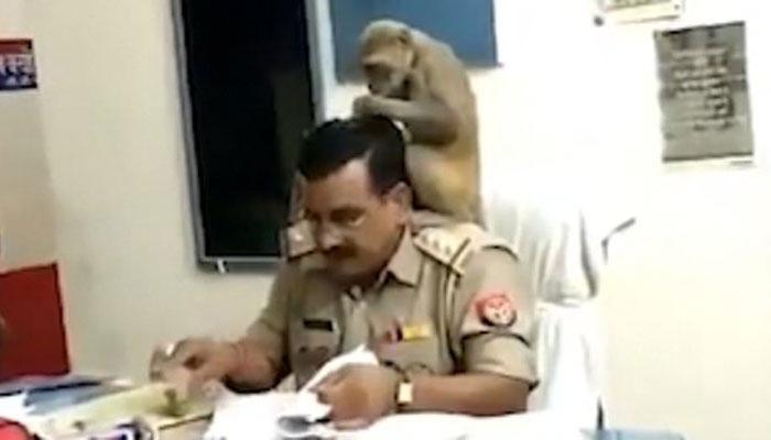 بھارت: جوئیں تلاش کرنے والے بندر کی ویڈیو وائرل