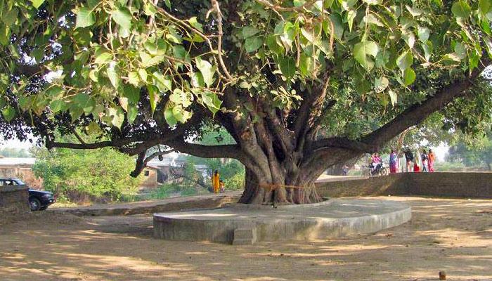 برگد کا پیڑ