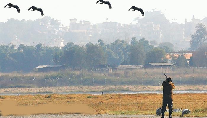 لاہور،جہاز سے پرندہ ٹکرانے کے بعد برڈ شوٹر حرکت میں آگئے