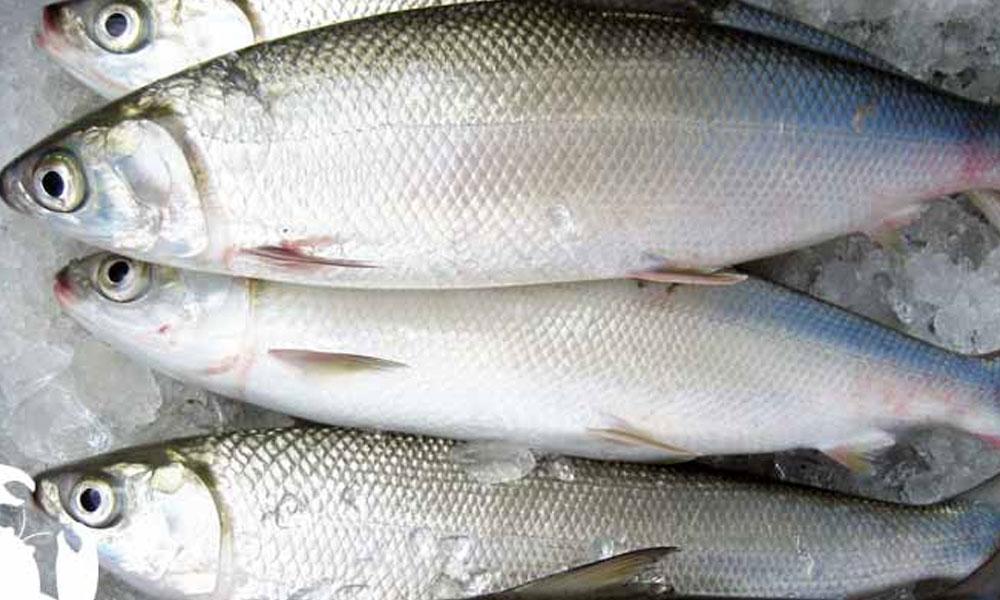 مچھلی کے بعد دودھ کا استعمال کیسا ہے ؟