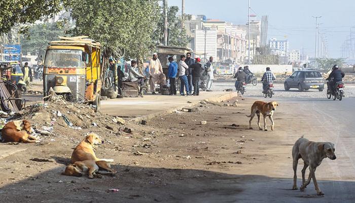 کراچی: کتے کے کاٹنے سے 23 افراد زخمی