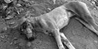 Dog That Bit 25 People In Karachi Found Dead