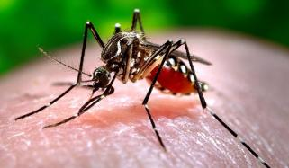 Dengue Death Toll In Karachi Rises To 10 Thousand