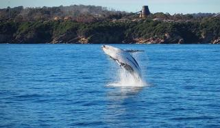 Pair Of Whales Delight Cruise Passengers Off Victoria Australia