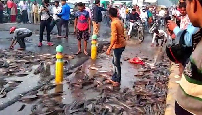 بھارت: سڑک پر مچھلیوں سے لدا ٹرک اُلٹ گیا
