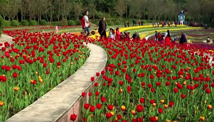 چین میں ہر سو پھیلے پھولوں سے فضا معطر