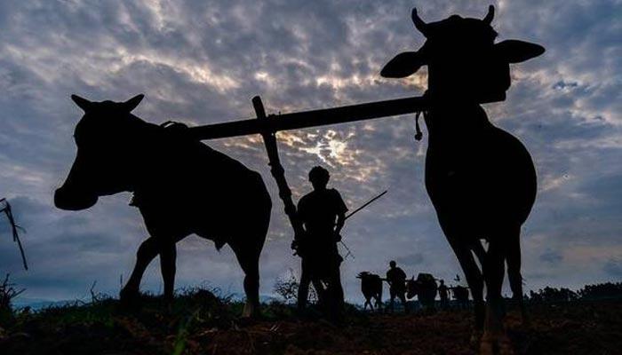 بے موسم کی بارش سے فصل تباہ، بھارتی کسان کی خودکشی