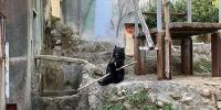 Kung Fu Bear Shows Off His Skills To Delight Zoo Visitors In Japan