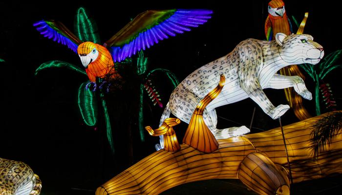 کولمبیا میں رنگ برنگی دیوہیکل لالٹینیں توجہ کا مرکز