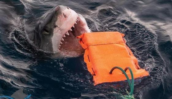 Scientists Found Ways To Avoid Shark Attacks