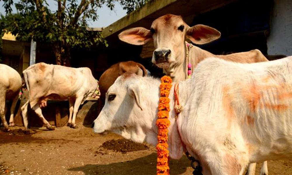بھارت میں گائے کی مردم شماری کی تجویز