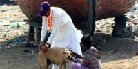 Vaccination Of Stray Dogs In Karachi