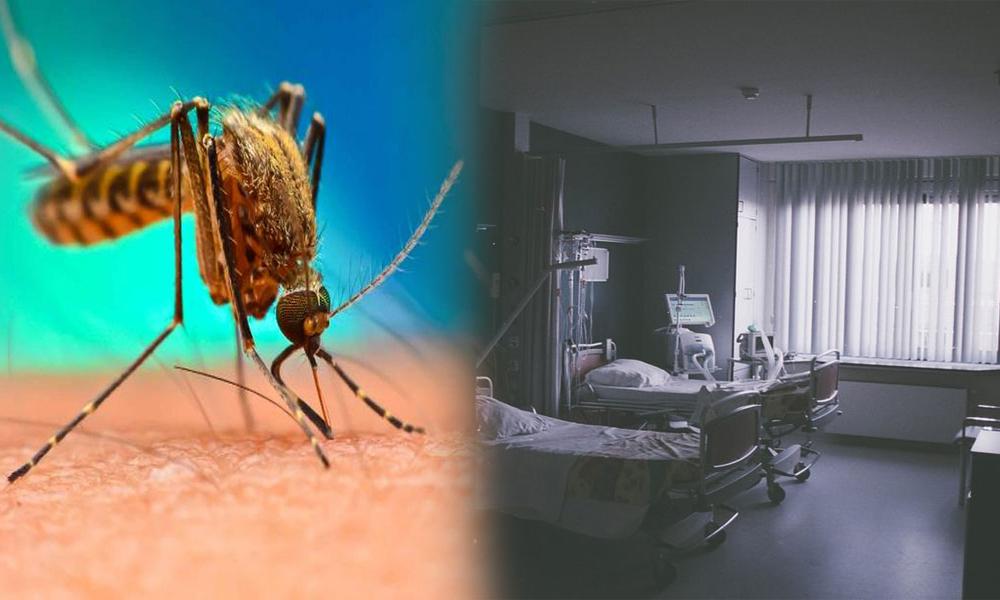 کراچی میں ڈینگی سے مزید 2 جاں بحق، خیبر پختون خوا میں مرض میں کمی