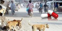 Anti Rabies Vaccine Shortage Case Hearing In Sindh High Court