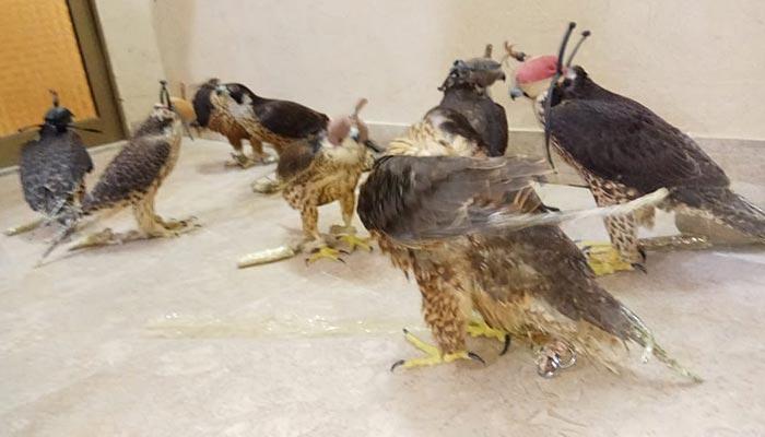 رینجرز نے نایاب پرندے اسمگل کرنے کی کوشش ناکام بنادی