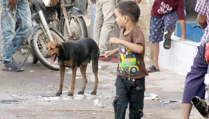 تھرپارکر، کتوں نے پرائمری کے11 بچوں کو کاٹ لیا