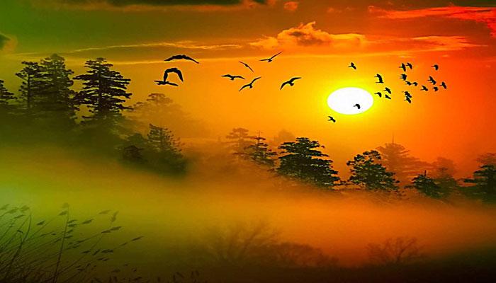 علی الصبح کو کتنی کوئلوں کی صدائیں سب پرندوں پر حاوی ہوتیں