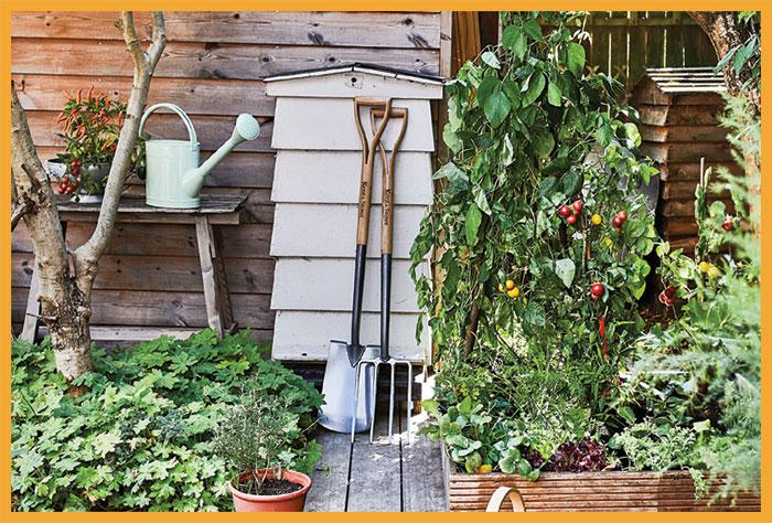 گھر میں سبزیاں اُگانا ایک عمدہ سرگرمی