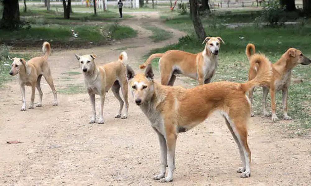 راجن پور میں کتے نے 3 بچوں کو کاٹ لیا
