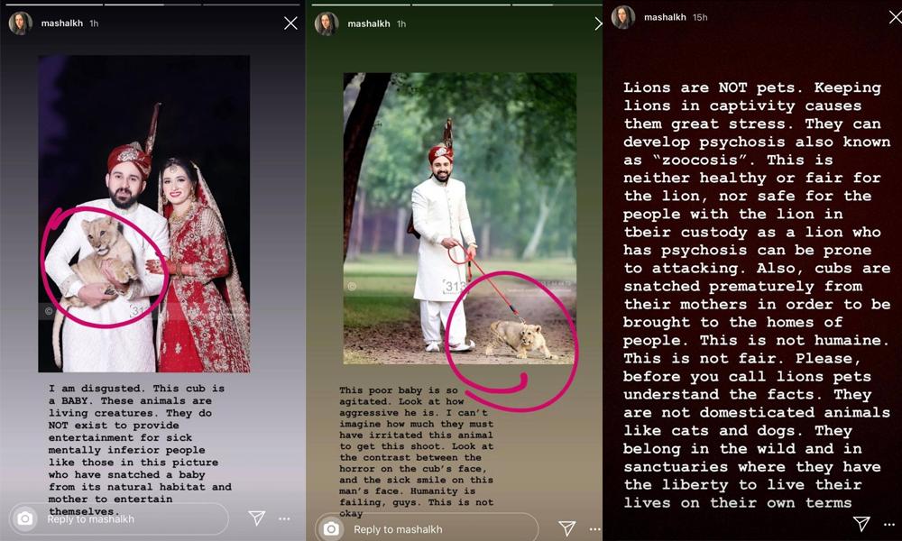 شیر کو فوٹو شوٹ کے لیے استعمال کرنے پر مشال خان برہم