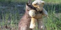 This Photo Of The Orphaned Kangaroo Captivated Viewers