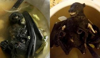 Eating Bat Soup And Live Mice Blamed For Corona Virus