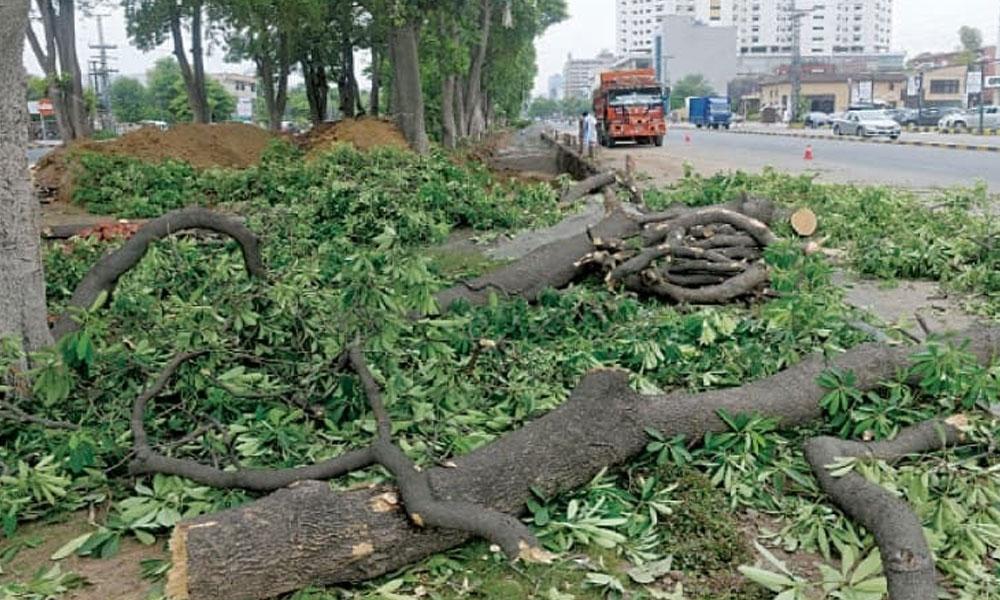 لاہور ہائیکورٹ درخت کٹائی پر برہم