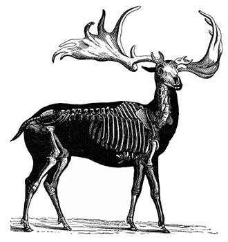 دنیا سےمعدوم ہونے والےچند جانور