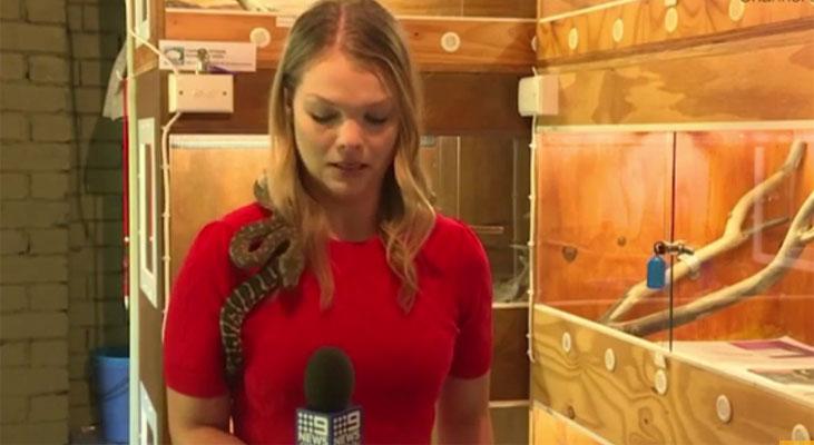 آسٹریلیا: سانپ کے بارے میں معلومات دیتی رپورٹرخوفزدہ ہو گئی