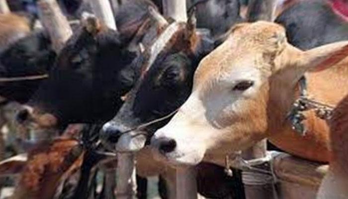 پاکپتن: کرنٹ لگنے سے 7 مویشیوں کی ہلاکت کا مقدمہ درج