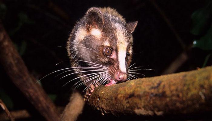 چین: جنگلی جانوروں کی تجارت اور کھپت پر پابندی کا اعلان