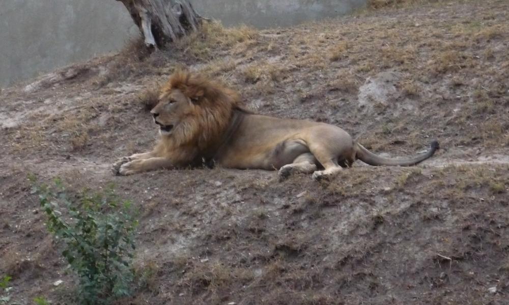 شیروں کے حملے سے جاں بحق ہونیوالے نوجوان کی تدفین