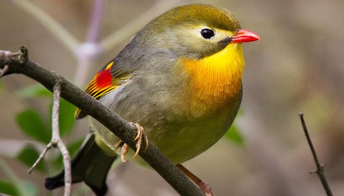 پاکستان کے چند خوبصورت پرندے